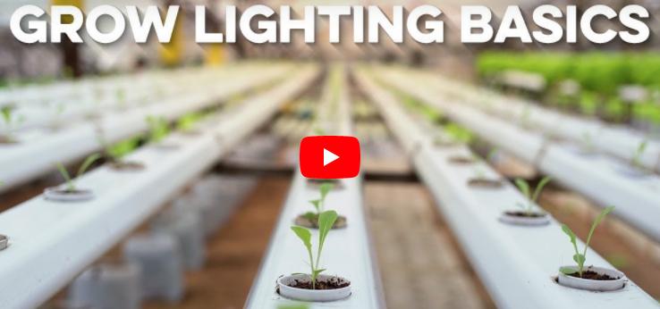 Grow Lighting Basics