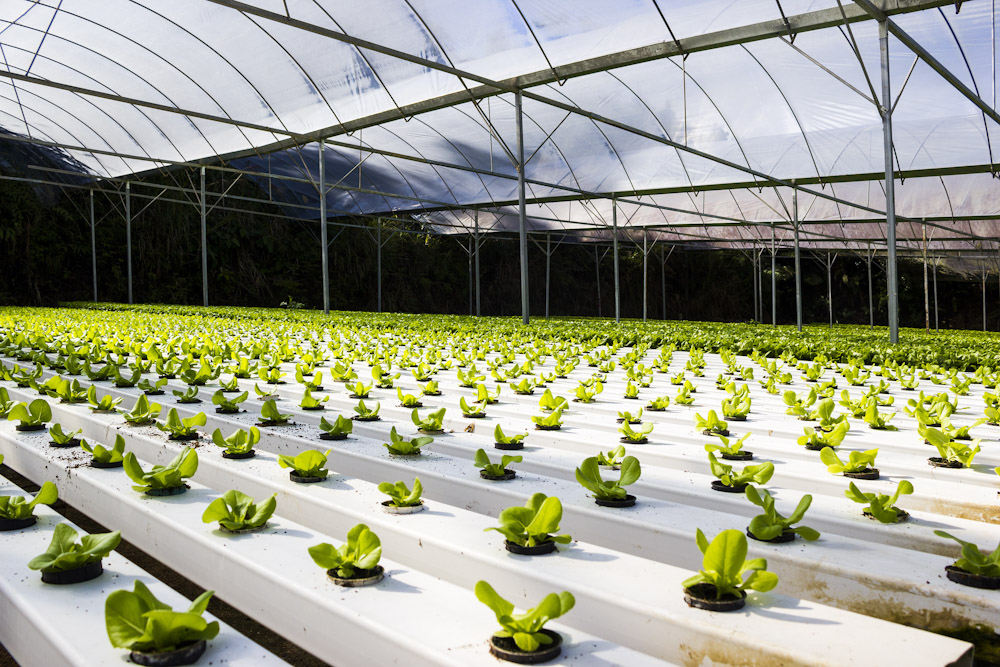 The Simple Science of Plant Growth