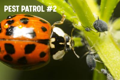 Pest Patrol - Part 2: Prevention