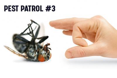 Pest Patrol - Part 3: Elimination and Restoration