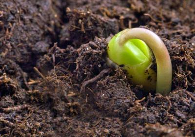 Probiotic Farming Practices