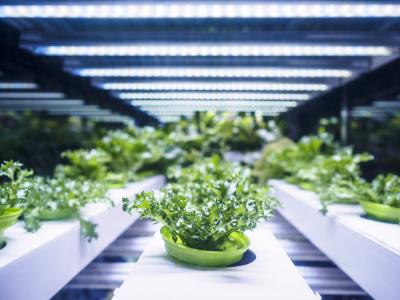 7 Reasons Why You Should Consider Hydroponics