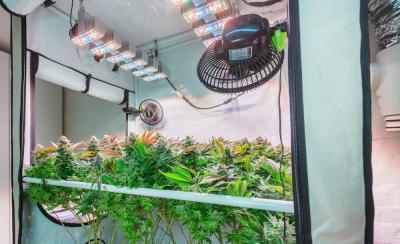 Why Choose a Portable Grow Room?